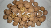 Sell Walnut In Shell / Walnut Kernels
