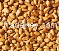 Good Dry Pine Nut with Shell