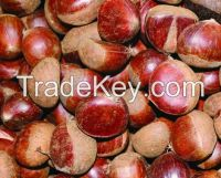 Organic Hazelnuts with High Quality