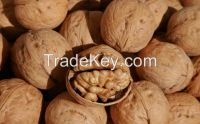 Walnuts good quality sale