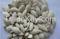 Pumpkin Seeds,