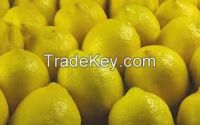 Fresh Lemon from South