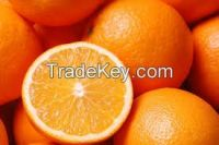 Fresh Oranges from South Africa