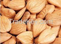 2014 New  Apricot Kernel / Almond kernels