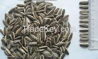 2014 New crop big sunflower seed Long Shape 5009 24/68