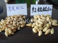 Pine nuts kernels for sale ,without shell