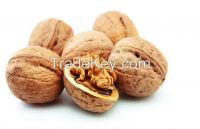 Whole and Halves Walnut In Shell and Without Shell Kernels