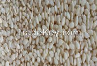 Natural White Sesame