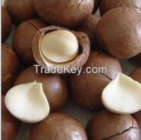 shelled Macadamia nuts price/ bulk Macadamia for sale