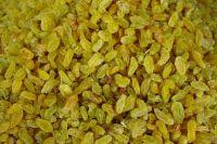 golden jumbo sultana green raisin