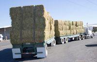 High Grade Alfalfa Hay for Animal Feeding at cheap price