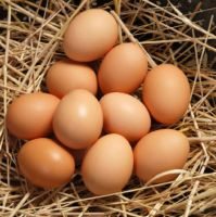 Fresh Brown and white standard eggs
