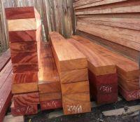 Top Pachy wood