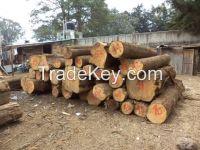 Cypress Logs