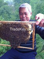Village Winter Honey