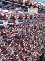 Mushroom Spawn Dried Mushroom
