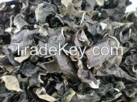 Sell Dried fungus