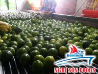 vietnam fresh lime seedless (+84342828779)