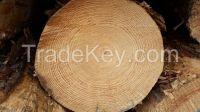 Australian Radiata Pine Timber Logs