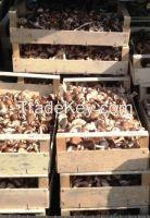 Organic Fresh Shiitake