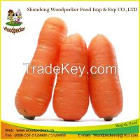 China Delicious Carrot New Fresh Carrot
