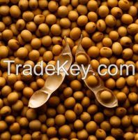 100% natural organic Soybeans