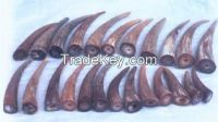 Horn tips from Cow or Buffalo