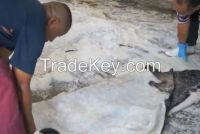 Salted Donkey Hides