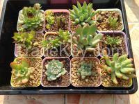 Akadama Soil/Kanuma Soil/Garden Soil/Succulent Soil
