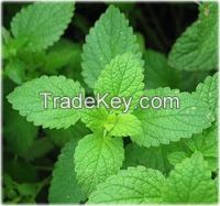Organic Peppermint- leaves