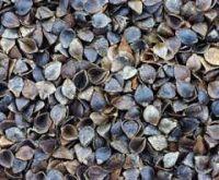 Organic buckwheat hull