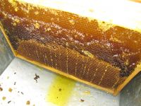 APPETIZING, RAW, UNFILTERED, PURE HONEY FROM THE BEST PLACES OF RUSSIA
