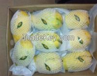 Fresh Sindhri Mangoes