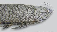 Silver Miniature Fish