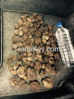 Truffles for sale from east europe