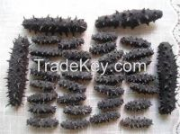 dry sea cucumber,price of dried cucumber manufacturer