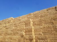 Wheat straw in compressed bales