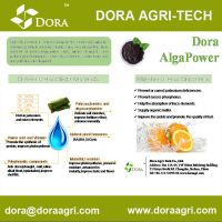 DORA Alga Power(seaweed extracts with low P)
