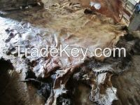 Dry and Wet Salted Donkey Skin