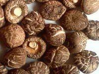 Dried shiitake mushroom origin Vietnam/Ms.Hanna
