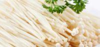 Enokitake/Winter mushroom/Flammulina velutipes/Ms.Hanna