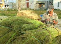 BEAUTIFUL HANDMADE GRASS BROM (Whatsapp +84 938880463)