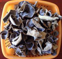 Red and black mushroom/Vietnam mushroom/Ms.Hanna