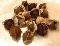 Moringa Oleifera Seeds High Quality origin from Viet Nam ( Anna + 84988332914)