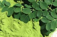 Pure Organic Moringa Dried Leaves ( Anna +84988332914 )