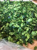 Dried Lemon leaf WHATSAPP +84 947 900 124