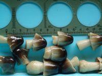 Straw mushroom in brine/Salted mushroom/Ms.Hanna