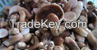 Organic bolete mushroom havest from forest/Origin Vietnam/Ms.Hanna