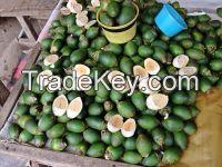 Betel Nut -Vietnam Product - High Quality -Best Price ( Anna + 8498332914/Whatsapp)