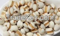 COIX SEEDS with a best quality in 2018 (Anna +84988332914/Whatsapp)